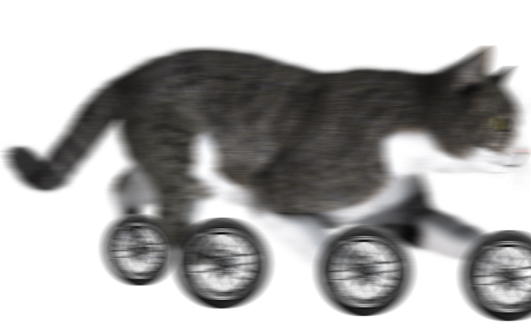 cat with s p e d.png