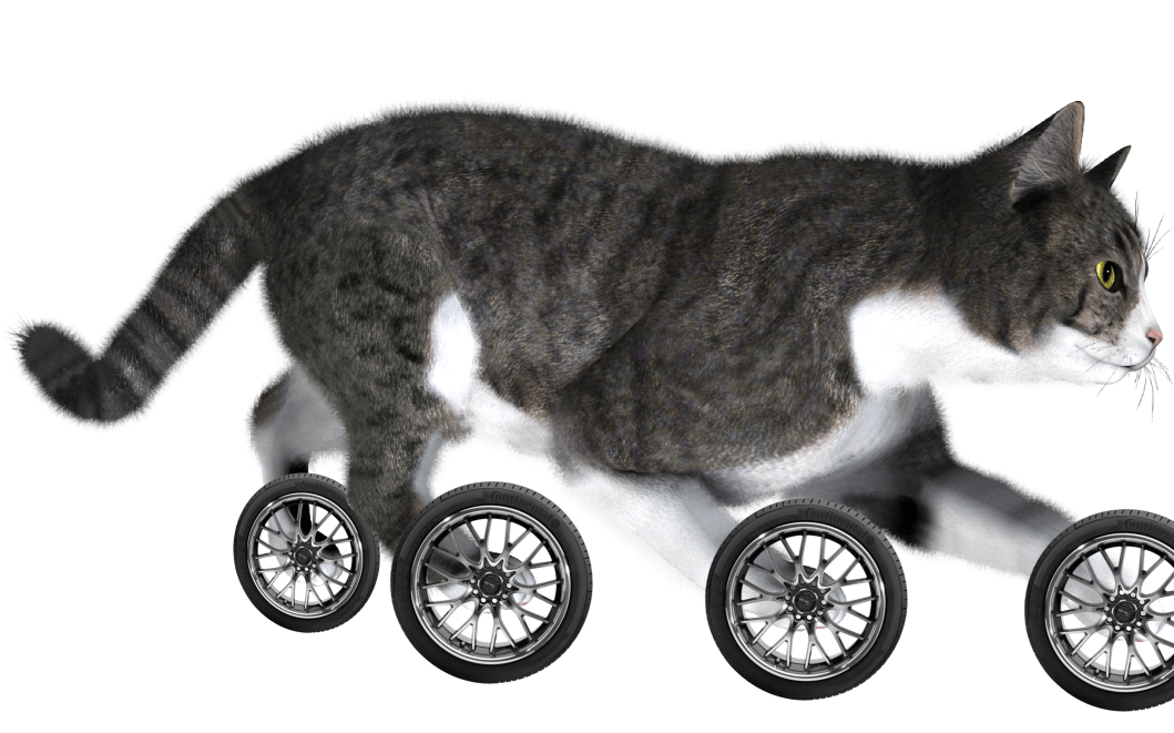 cat with wheels.png