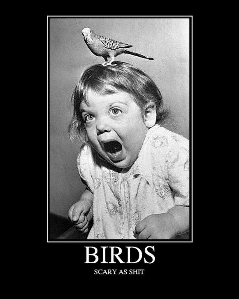 demotivational-birds-scary-819x1024.jpg