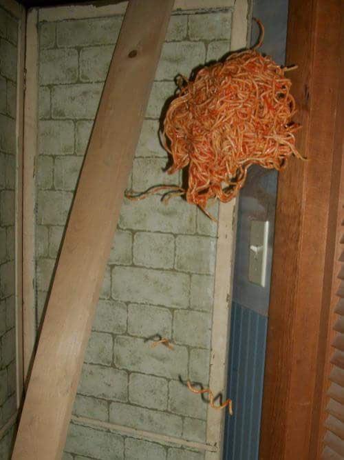Flying spaghetti.jpg