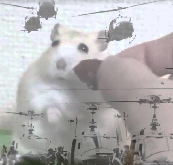 hamsterflash.jpg