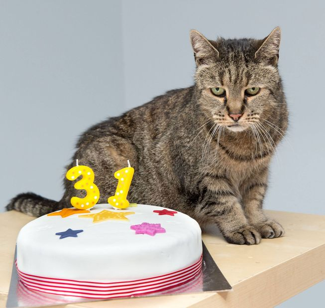 nutmeg-cat-with-his-birthday-cake.jpg.653x0_q80_crop-smart.jpg