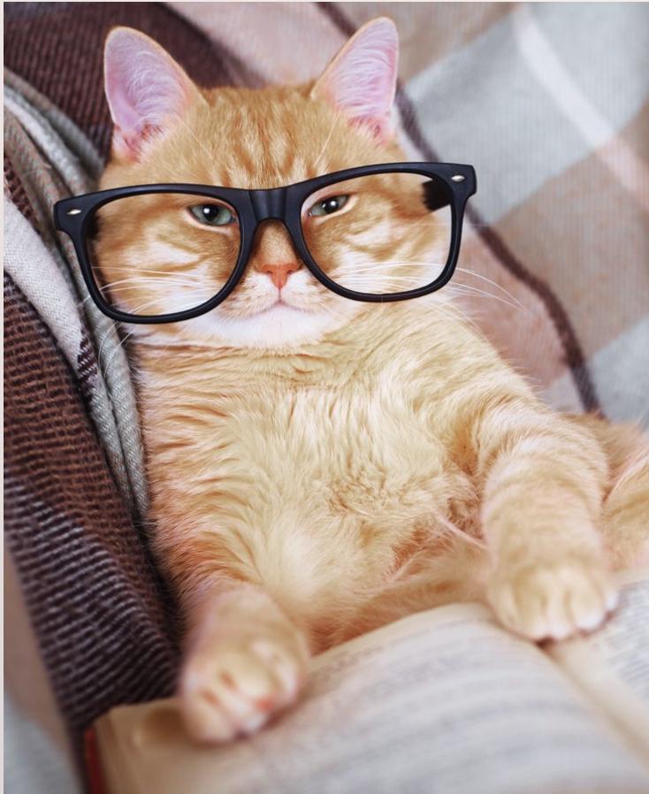 Quantumcat.png