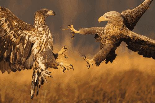 tumblr-karate-eagle.png