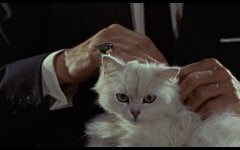 Blofelds_cat_FRWL.jpg