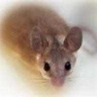 mice R nice ~(_&