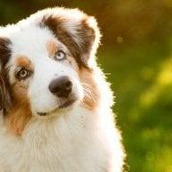 trained-dog