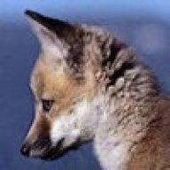 SlyFox_227207