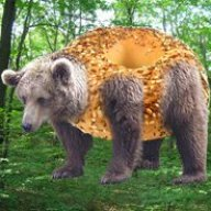 Bagel_Bear