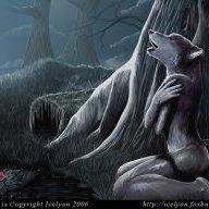 wildcat2083