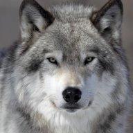 Phantom-Wolf