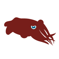 Crimson Cuttlefish