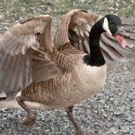 goose121