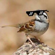 Pro_Sparrow