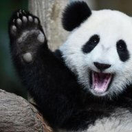 PandaMeister