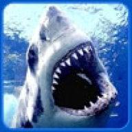 shark2003