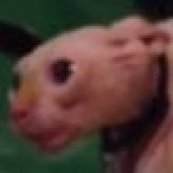Sniffaluffagus