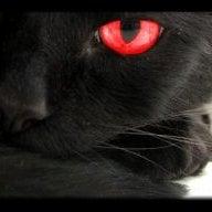 Cat15368