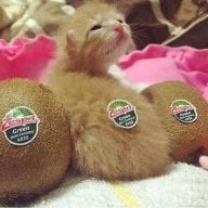 Kiwi_Kitten