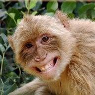 monkey69